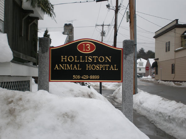 holliston-animal